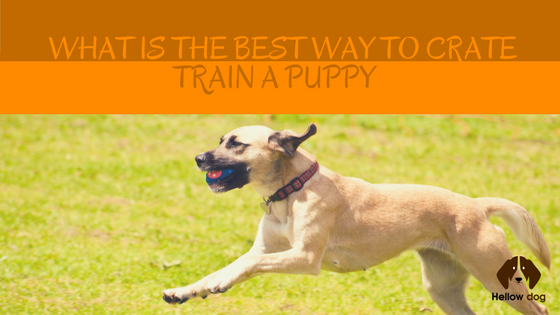 Best Way To Kennel Train A Dog