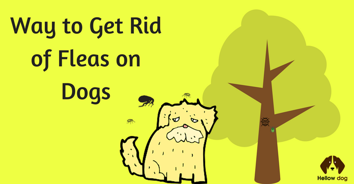 What Do You Do When Your Dog Gets Fleas