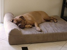 Big Barker Pillow Top Orthopedic Bed