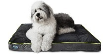 First Quality Thick Orthopedic Dog Bed