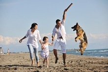 How to enjoy your holidays with your pet dog