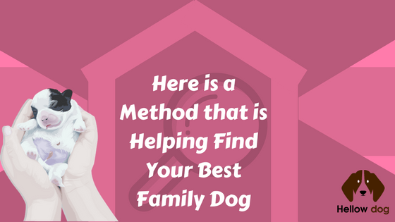 Find Your Best Family Dog