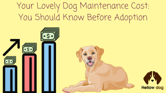 How Much You Will Incur For the Proper Care of Your Dog