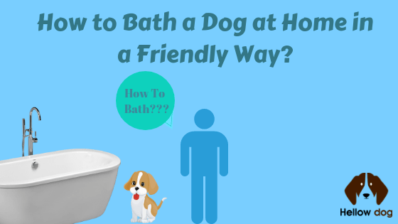 How to Bath a Dog at Home