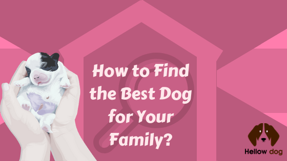 How to Find the Best Dog for Your Family
