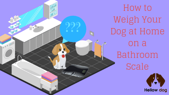 How to Weigh Your Dog at Home