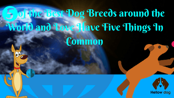 Top 5 Dogs For Families