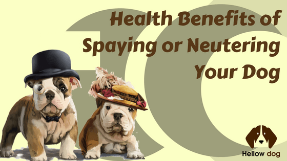 Health Benefits of Spaying or Neutering Your Dog