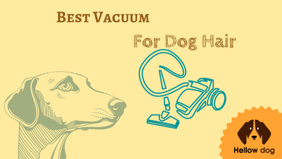 Best Stick Vacuum For Dog Hair