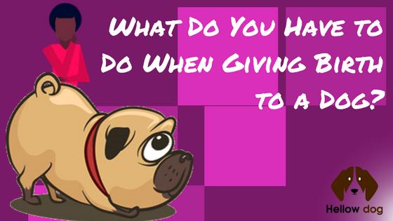 How To Help A Dog Give Birth Hellowdog