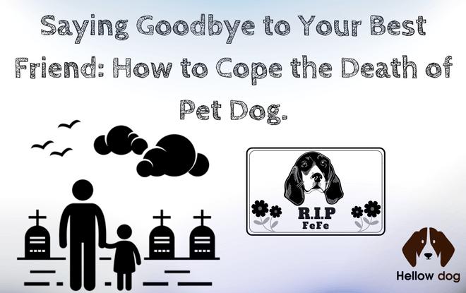 How to Cope with Losing a Dog