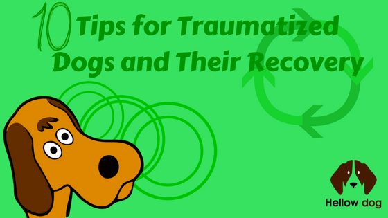 Tips for Traumatized Dogs and Their Recovery