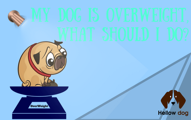 Dog is Overweight