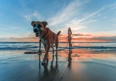 Dog playing in beach