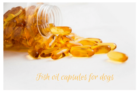 fish oil capsules for dogs