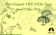Best Organic CBD Oil for Dogs