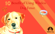10 Benefits of Using Wireless Dog Fence