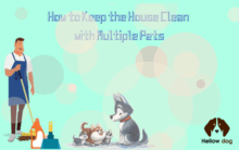 How to Keep the House Clean with Multiple Pets