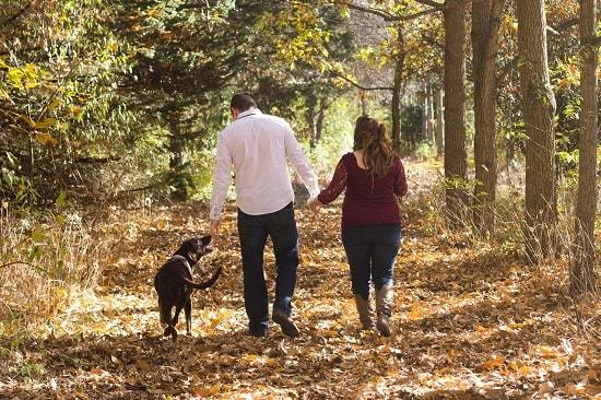 dog breeds that can walk off leash