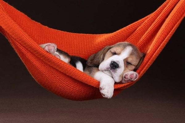 7 Interesting Things You Didnt Know About How Dogs Sleep Hellow Dog