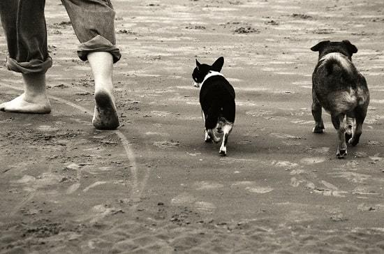 off-leash dog beach
