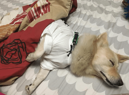 Dog Sleeping on the bed