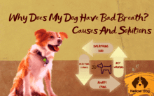 causes bad breath dogs