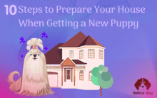 Getting a New Puppy