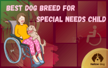 Best Dog Breed for Special Needs Child