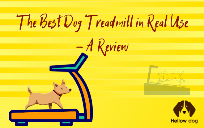 Best Dog Treadmill