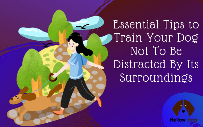 Essential Tips to Train Your Dog Not To Be Distracted By Its Surroundings